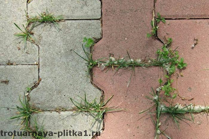 Почему появляется трава между тротуарной плиткой в Наро-Фоминске