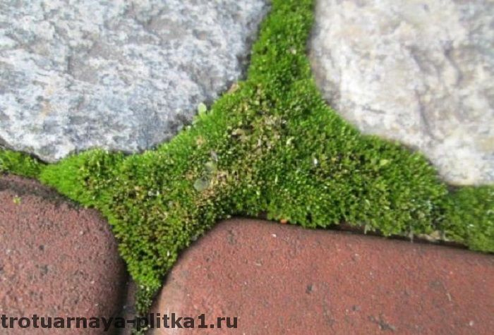 Мох на брусчатке в Наро-Фоминске
